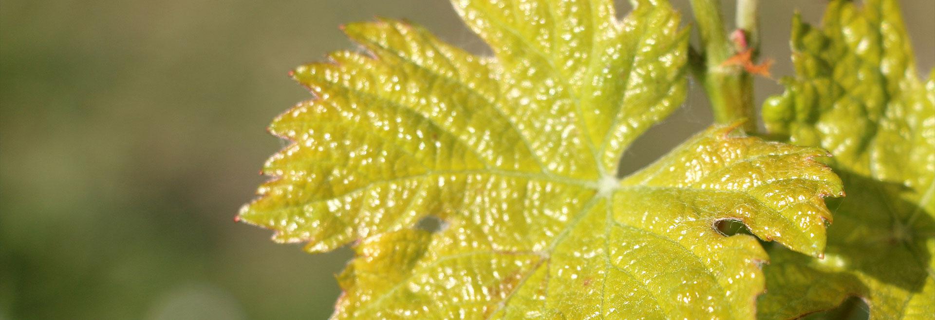 Domaine Des Hautes Vignes Distre