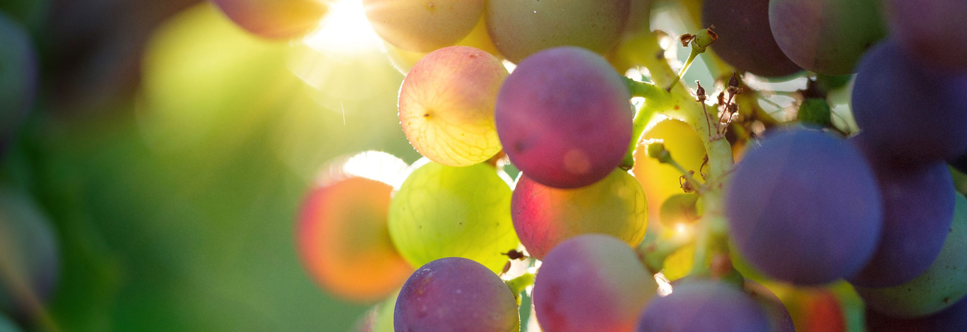 Winemaker Saumurois Distre