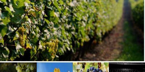 The Domaine des Hautes Vignes comes to meet you